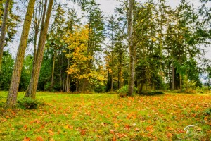 Troll Haven Property For Sale Sequim-10