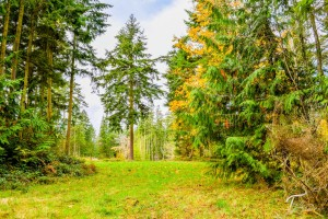 Troll Haven Property For Sale Sequim-12