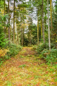 Troll Haven Property For Sale Sequim-13