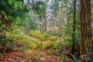 Troll Haven Property For Sale Sequim-14
