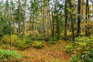 Troll Haven Property For Sale Sequim-15