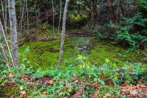 Troll Haven Property For Sale Sequim-17