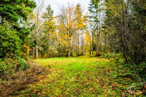 Troll Haven Property For Sale Sequim-18