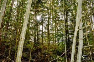 Troll Haven Property For Sale Sequim-22