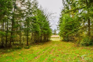 Troll Haven Property For Sale Sequim-24