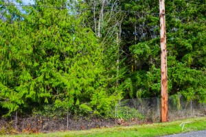 Troll Haven Property For Sale Sequim-28