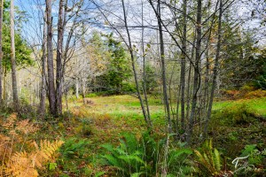 Troll Haven Property For Sale Sequim-4