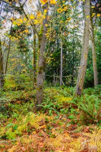Troll Haven Property For Sale Sequim-5
