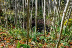 Troll Haven Property For Sale Sequim-8