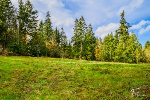 Troll Haven Property For Sale Sequim-9